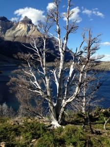 Patagonien 1000